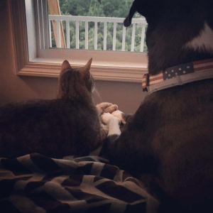 Dog, Cat, and Thunderstorm: My dog and cat comforting each other during a thunderstorm