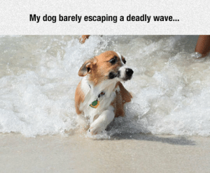 Tumblr, Blog, and Http: My dog barely escaping a deadly wave... srsfunny:The Short Legs, They Do Nothing