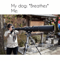 "Memes, 🤖, and Dog: My dog: *Breathes'""  C:  @dogpgryin Gonna need a bigger lens. Via @dogpartying"
