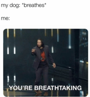 Memes, 🤖, and Dog: my dog: *breathes*  me:  YOU'RE BREATHTAKING https://t.co/eAXgGU6QAC