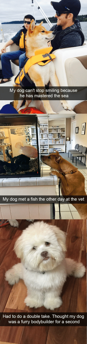 animalsnaps:Dog snaps: My dog can't stop smiling because  he has mastered the sea   My dog met a fish the other day at the vet   Had to do a double take. Thought my dog  was a furry bodybuilder for a secon animalsnaps:Dog snaps