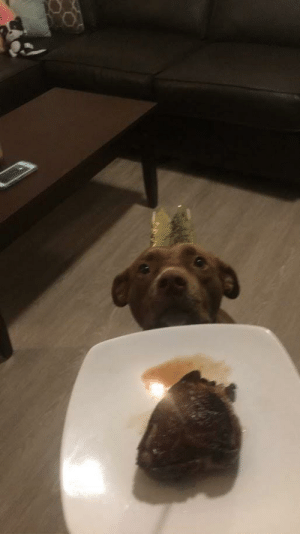 """My dog celebrated her second birthday with me a few days ago. She got a """"cake"""" of bacon-wrapped filet mignon.: My dog celebrated her second birthday with me a few days ago. She got a """"cake"""" of bacon-wrapped filet mignon."""