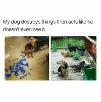 I'm the same tbh | More 👉 @miinute: My dog destroys things then acts like he  doesn't even see it I'm the same tbh | More 👉 @miinute