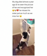 Memes, 🤖, and Her: My dog died almost a year  ago & he seen the picture  of her and recognized her  he misses his  sister just as much as we  miss her 😭😭😭😭😭