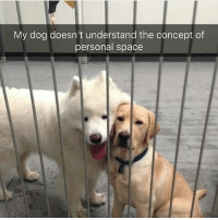 Oh my god, @hilarious.ted is my favorite animal meme account. Look at the dog on the right! Via @hilarious.ted: My dog doesn't understand the concept of  personal space Oh my god, @hilarious.ted is my favorite animal meme account. Look at the dog on the right! Via @hilarious.ted