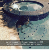 😂😂😂lol - - - - - - - 420 memesdaily Relatable dank MarchMadness HoodJokes Hilarious Comedy HoodHumor ZeroChill Jokes Funny KanyeWest KimKardashian litasf KylieJenner JustinBieber Squad Crazy Omg ovo Kardashians Epic bieber Weed TagSomeone hiphop trump rap drake: My dog escaped from the yard today and about 30  minutes later my neighbor sent me this picture 😂😂😂lol - - - - - - - 420 memesdaily Relatable dank MarchMadness HoodJokes Hilarious Comedy HoodHumor ZeroChill Jokes Funny KanyeWest KimKardashian litasf KylieJenner JustinBieber Squad Crazy Omg ovo Kardashians Epic bieber Weed TagSomeone hiphop trump rap drake