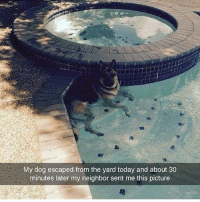 This dog has the right idea! 🐶 💦 @worldstar WSHH: My dog escaped from the yard today and about 30  minutes later my neighbor sent me this picture This dog has the right idea! 🐶 💦 @worldstar WSHH