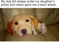 Heart, Dog, and Heart Attack: My dog fell asleep under my daughter's  pillow and nearly gave me a heart attack The aftermath of the Chernobyl disaster (1986)