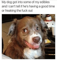 Dank Memes, Good Times, and Freaks: My dog got into some of my edibles  and can't tell if he's having a good time  or freaking the fuck out @champagneemojis he looks pretty fuckin high