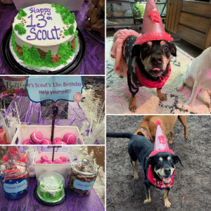 My dog had a 13th birthday party at the dog park: My dog had a 13th birthday party at the dog park