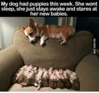 Dogs, Memes, and 🤖: My dog had puppies this week. She wont  sleep, she just stays awake and stares at  her new babies.