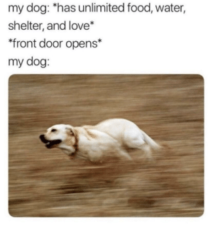 Food, Love, and Water: my dog: *has unlimited food, water,  shelter, and love*  front door opens*  my dog: L8r losers.