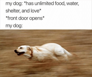 Food, Funny, and Love: my dog: *has unlimited food, water,  shelter, and love*  front door opens*  my dog: Afternoon Funny Meme Dump 37 Pics