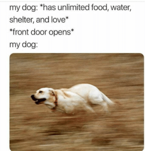 "Dank, Food, and Love: my dog: *has unlimited food, water,  shelter, and love*  *front door opens*  my dog: ""Goodbye forever."" by MetalW0lf MORE MEMES"