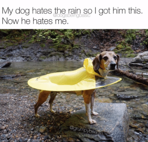 Worst or best dog dad ever?Pup @grumpybeagle: My dog hates the rain so I got him this.  Now he hates me  @dogsbeingbasic  @grumpybeagie Worst or best dog dad ever?Pup @grumpybeagle