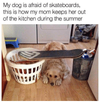 Follow me @antisocialtv @lola_the_ladypug @x__social_butterfly__x @x__antisocial_butterfly__x: My dog is afraid of skateboards,  this is how my mom keeps her out  of the kitchen during the summer Follow me @antisocialtv @lola_the_ladypug @x__social_butterfly__x @x__antisocial_butterfly__x