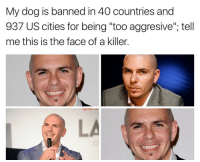 """Funny, Killers, and The Face: My dog is banned in 40 countries and  937 US cities for being """"too aggresive"""", tell  me this is the face of a killer. DALE"""