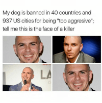 """Memes, Pitbull, and Cuban: My dog is banned in 40 countries and  937 US cities for being """"too aggresive""""  tell me this is the face of a killer eva u should have put pitbull as a famous cuban person in ur topic four years ago"""