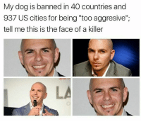 """Dog, Killers, and Face: My dog is banned in 40 countries and  937 US cities for being """"too aggresive"""";  tell me this is the face of a killer"""