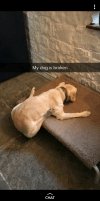 Chat, Dog, and Really: My dog is broken  CHAT Doesnt really need a title
