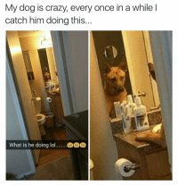 Crazy, Dogs, and Funny: My dog is crazy, every once in a while l  catch him doing this  What is he doing lol Just getting in the zone | For more 👉 @miinute