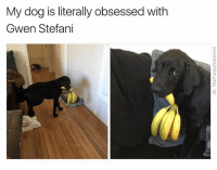 Good, Dank Memes, and Stefani: My dog is literally obsessed with  Gwen Stefani Me: Who's a good boy? Dog: Me: Who's a holler back boy? Dog: *just fuckin loses it*