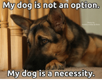 TRUTH!: My dog is not an option.  Photo by  Andrew Kelley flickr  My dog is a necessity. TRUTH!