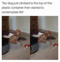 "Climbing, Funny, and Plastic: ""My dog just climbed to the top of this  plastic container then started to  contemplate life"" I do the same sometimes"