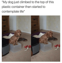 "Climbing, Memes, and 🤖: ""My dog just climbed to the top of this  plastic container then started to  contemplate life"" *Will I ever truly be a good boy?* - 🐶"