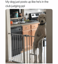 Club, Girl Memes, and Dog: My dog just posts up like he's in the  club judging ppl That's the ugliest effing skirt I've ever seen