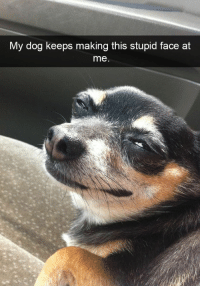 90 Funny Dog Snapchats Pictures: My dog keeps making this stupid face at  me 90 Funny Dog Snapchats Pictures