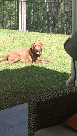 My dog likes to smile for the camera because he knows if it's a good picture I'll pat him after.: My dog likes to smile for the camera because he knows if it's a good picture I'll pat him after.