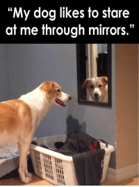 """My dog likes to stare  at me through mirrors."" Little creep."