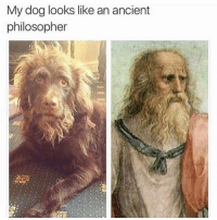 Funny, Tbh, and Ancient: My dog looks like an ancient  philosopher And also a hugeeee stoner tbh (@openlygayanimals)