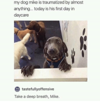 Dank, Today, and 🤖: my dog mike is traumatized by almost  anything... today is his first day in  daycare  to  tastefullyoffensive  Take a deep breath, Mike.