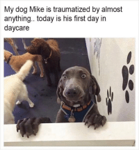. The Meme Train .: My dog Mike is traumatized by almost  anything.. today is his first day in  daycare . The Meme Train .