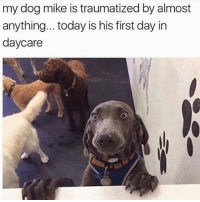 Dogs, Funny, and Memes: my dog mike is traumatized by almost  anything... today is his first day in  daycare @dogsbeingbasic has amazing dogs memes