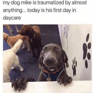 Fact: animals > humans. #Memes #Animals #Dogs #Cats #Feline: my dog mike is traumatized by almost  anything... today is his first day in  daycare Fact: animals > humans. #Memes #Animals #Dogs #Cats #Feline