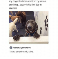 this is totally random, but the Muslim call to prayer is like. the most beautiful thing I've ever heard.: my dog mike is traumatized by almost  anything... today is his first day in  daycare  to  tastefully offensive  Take a deep breath, Mike. this is totally random, but the Muslim call to prayer is like. the most beautiful thing I've ever heard.