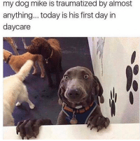 Be Like, Dogs, and Memes: my dog mike is traumatized by almost  anything... today is his firstday in  daycare lmaoo don't be like mike 😂😂 this is @making_people_laugh_101 💯💯 facts nochill