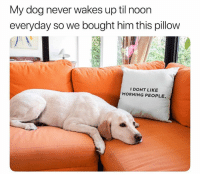 Cute, Funny, and Memes: My dog never wakes up til noon  everyday so we bought him this pillow  IDONT LIKE  MORNING PEOPLE. 42 Cute Animal Memes That Never Stop Being Funny