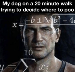 Dog math: My dog on a 20 minute walk  trying to decide where to poo  -b ± Vb? - 4c  10 Dog math