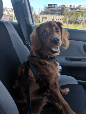 My dog on the way to the dog park: My dog on the way to the dog park