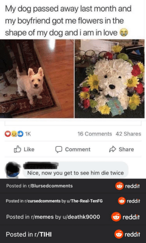 Reddits new watermark system is getting out of hand.: My dog passed away last month and  my boyfriend got me flowers in the  shape of my dog and i am in love  1K  16 Comments 42 Shares  O Like  Share  Comment  Nice, now you get to see him die twice  Oreddit  Posted in r/Blursedcomments  reddit  Posted in r/cursedcomments by u/The-Real-TenFG  O reddit  Posted in r/memes by u/deathk9000  & reddit  Posted in r/TIHI Reddits new watermark system is getting out of hand.