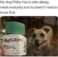 Such a handsome boi: My dog Philby has to take allergy  meds everyday but he doesn't need to  know that.  -HANDSOME  PILLS Such a handsome boi