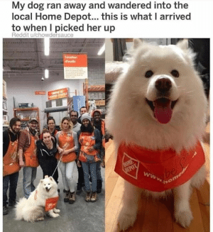 Reddit, Home, and Home Depot: My dog ran away and wandered into the  local Home Depot... this is what I arrived  to when I picked her up  Reddit u/chowdersauce employee of the month