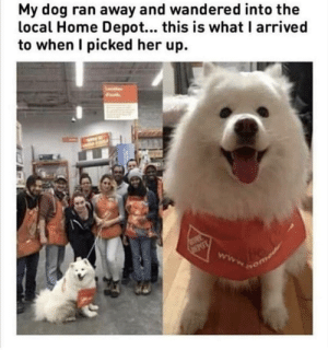 Home, Home Depot, and Doggo: My dog ran away and wandered into the  local Home Depot... this is what I arrived  to when I picked her up. Doggo puts the home in Home Depot