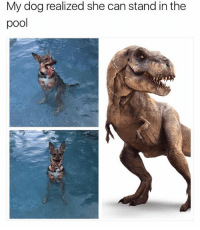 Funny, Meme, and Pool: My dog realized she can stand in the  pool @funny is hilarious 😂