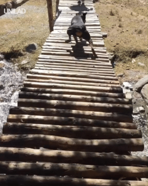 'My dog runs over bridges in the most hilarious way and I have no idea why...' 😭😭: 'My dog runs over bridges in the most hilarious way and I have no idea why...' 😭😭
