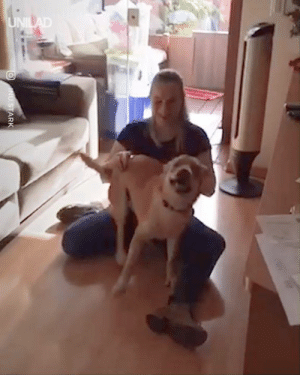 'My dog seeing me for the first time after I've spent 3 years travelling' 😍😍: 'My dog seeing me for the first time after I've spent 3 years travelling' 😍😍